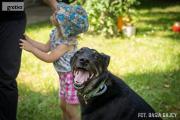 Zdjęcie do ogłoszenia: Kocha dzieci i aportowanie - Pharell do adopcji!