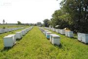 Zdjęcie do ogłoszenia: Ukraina.Grunty rolne,posiadlosci z sadem,ogrodem 0,30ha w cenie 3 tys