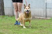 Zdjęcie do ogłoszenia: Wesoły przyjacielski psiak poleca się do adopcji
