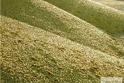 Zdjęcie do ogłoszenia: Ukraina.Tlocznia nasion oleistych,soi,rzepaku,lnu,kukurydzy,zboz