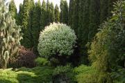 Zdjęcie do ogłoszenia: Projektowanie Ogrodów Kielce ,Nawodnienia ,Realizacja,Nawodnienia