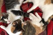 Zdjęcie do ogłoszenia: Piękne wesołe i rezolutne kotki czekają na wymarzone domki