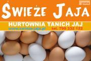 Zdjęcie do ogłoszenia: Jaja-Hurt Jaj-Leszno, Śmigiel, Kościan,Stęszew,Luboń,Poznań,Kórnik