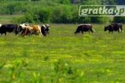 Zdjęcie do ogłoszenia: Ukraina.Grunty rolne.Fermy bydla,trzody,drobiu na sprzedaz,wynajem.