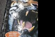 Zdjęcie do ogłoszenia: Filmy na DVD: Tygrysy, Złotowłosa i 3 misie, Little People