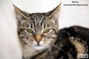 Zdjęcie do ogłoszenia: Botka - nieśmiała koteczka
