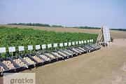 Zdjęcie do ogłoszenia: Ukraina. Warzywa,kapusta biala,czerwona,kwaszona. Ziemniaki 0,20 zl/kg