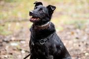 Zdjęcie do ogłoszenia: Koksik - pies/torpeda potrzebuje domu na już!