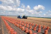 Zdjęcie do ogłoszenia: Ukraina.Warzywa,ziemniaki 0,25 zl/kg.Grunty rolne 150 zl/ha.Oferujemy