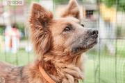 Zdjęcie do ogłoszenia: Sofi, wyjątkowy pies szuka wyjątkowego domu - może to właśnie Twój?